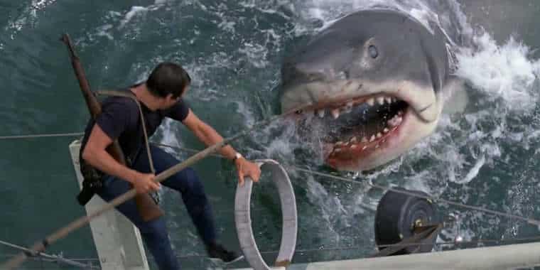 Lyon : des requins dans la piscine du Rhône !