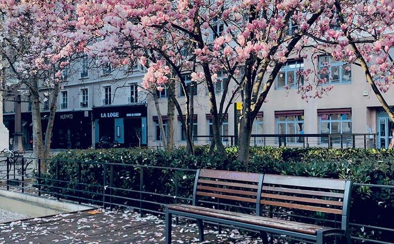 Lyon-4e-Fleur